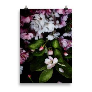 Poster mit Kirschblüten