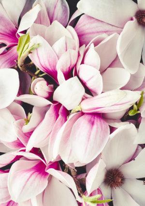 Blumen & Florales